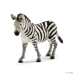 Zebra, Female