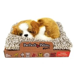 Perfect Petzzz Mini Cavalier King Charles