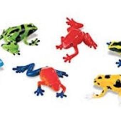 Poison Dart Frogs in Bin