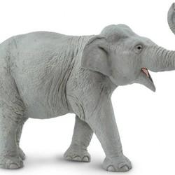 Wildlife Wonders Asian Elephant