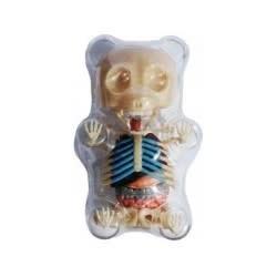4D Vision - Gummi Bear Anatomy Model