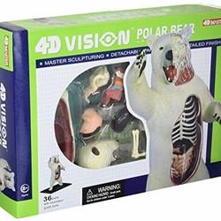 4D Vision Polar Bear Anatomy Model