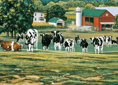 Farm life / Farm animals