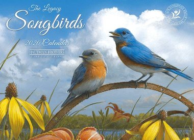 Songbirds / Birds