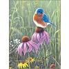 Bluebird in Prairie Note Card Set