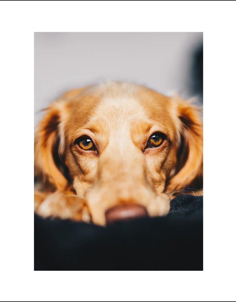 Pet Distance Consultation