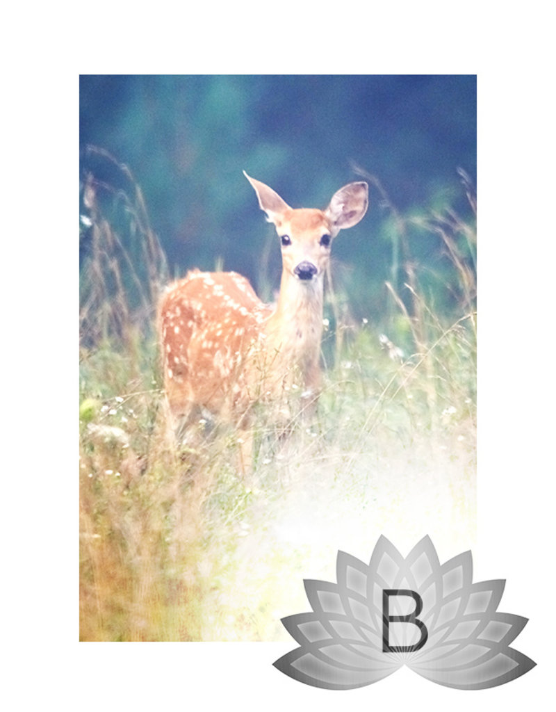 Doe's Day Special | Silver Bells Package B