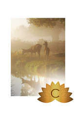 Doe's Day Special | Bronze Package C