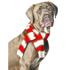 Chilly Dog White and Red Dog Scarf