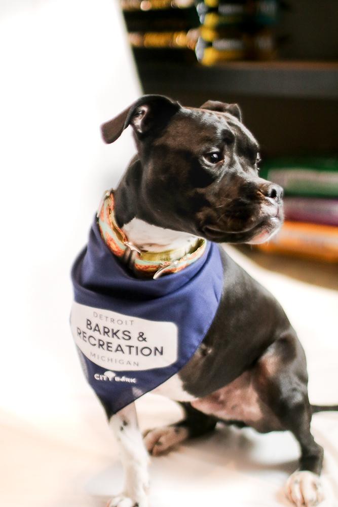 City Bark Detroit Barks & Recreation Navy Dog Bandana
