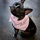 City Bark J'aime Detroit Pink Dog Bandana
