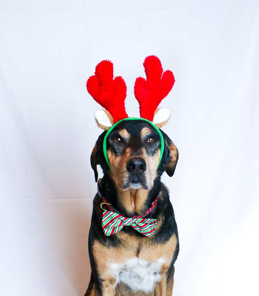 Zippy Paws Holiday Dog Antlers