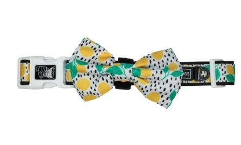 Big and Little Dogs Main Squeeze Dog Collar and Bow Tie