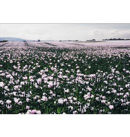 Fleetwood Flanders Field (Unique) by Mick Fleetwood