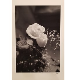 Unknown White Rose by Unknown