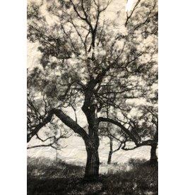 Robinson Texture by Brannan Robinson