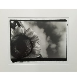 Enlow Sunflower by Ken Enlow