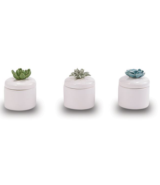 Mud Pie Succulent Citronella Candles
