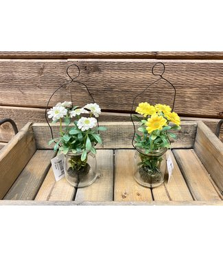 """8.5"""" Glass Jar with Wire Hanger and White Daisies"""
