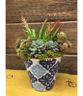 Custom Made Succulent Arrangement in PORTO SMALL POTS Medallion