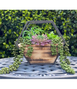 "Flora Bunda 9"" Hexagon Wood and Metal Wall Succulent Mix"