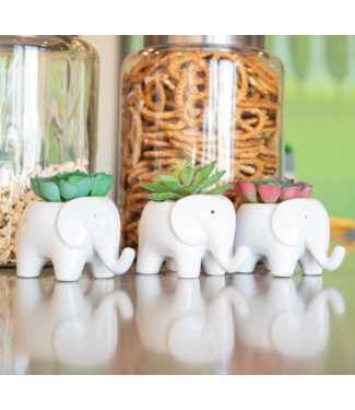 Flora Bunda Ceramic Elephant Planter