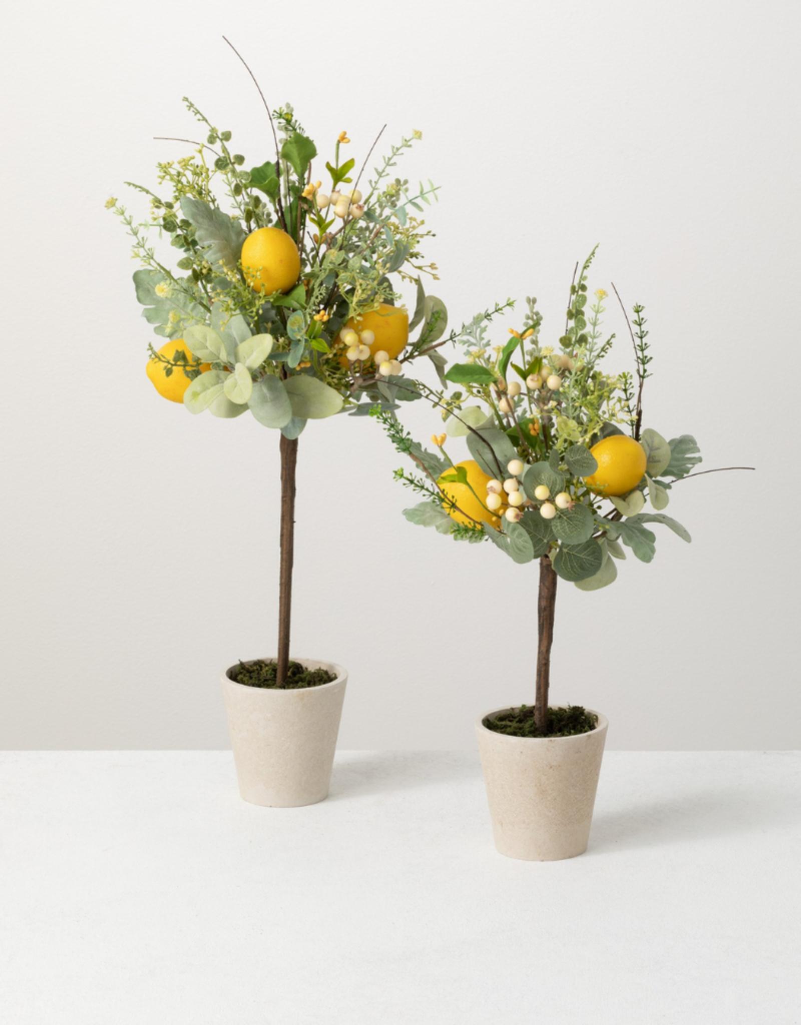 Ens. 2 citronniers décoratifs