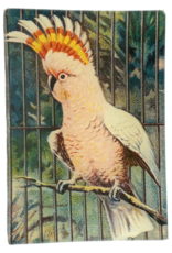 JOHN DERIAN Pink Parrot Tray