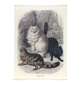 JOHN DERIAN Angora Cats