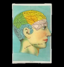 JOHN DERIAN Phrenology Head