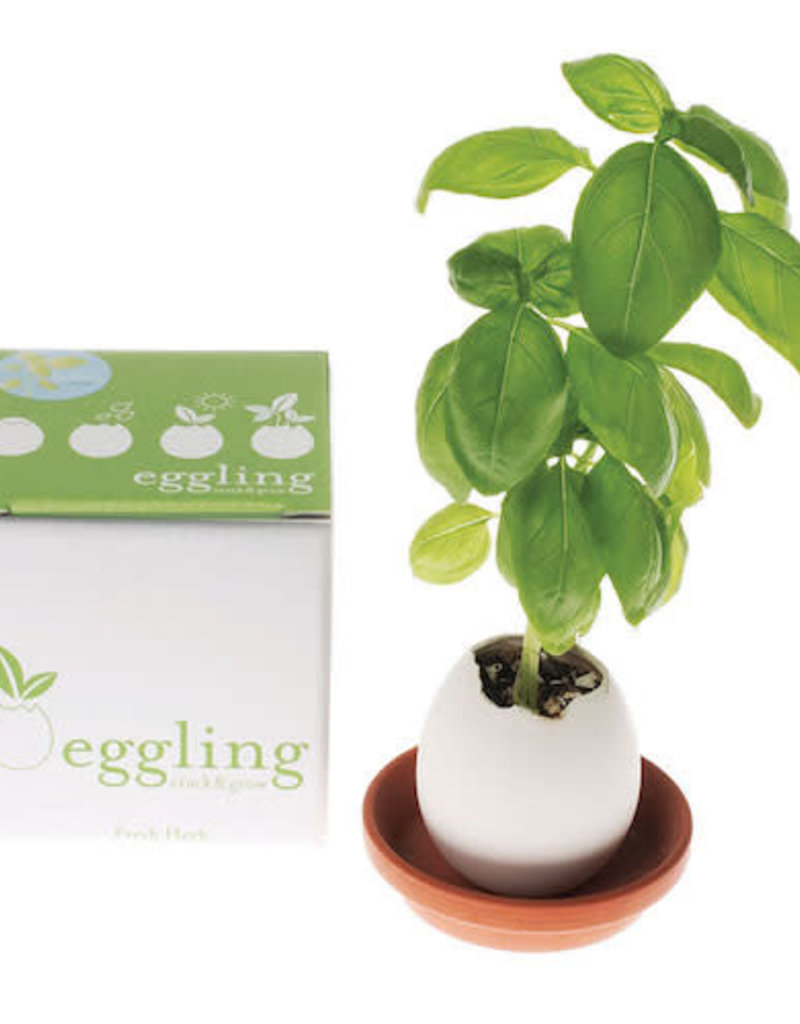 Eggling Crack and Grow