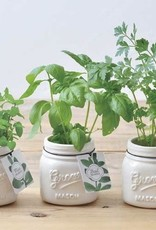 Jar Garden- Ceramic Jar & Plant