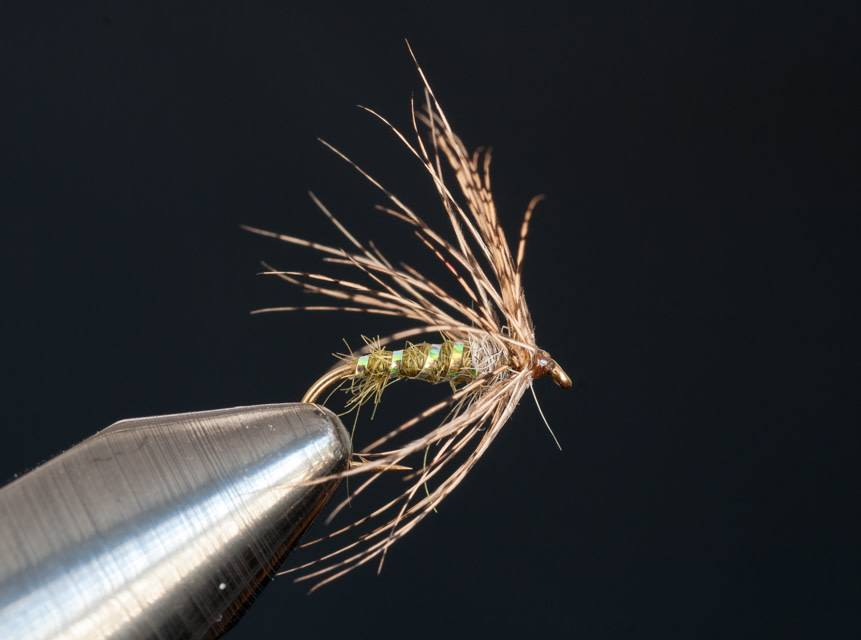 Caddis Soft Hackle