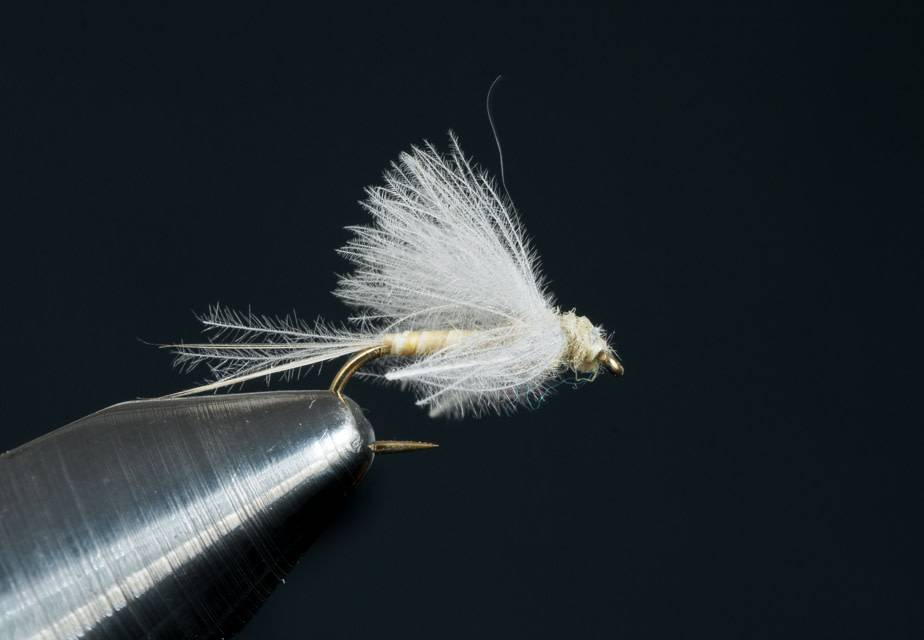 CDC Biot Emerger