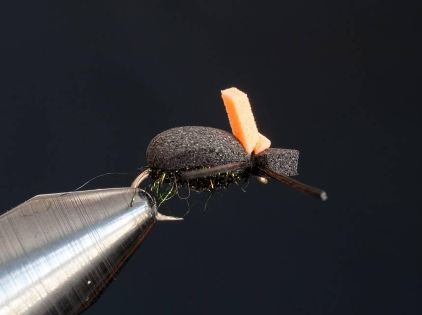 Gulp Beetle