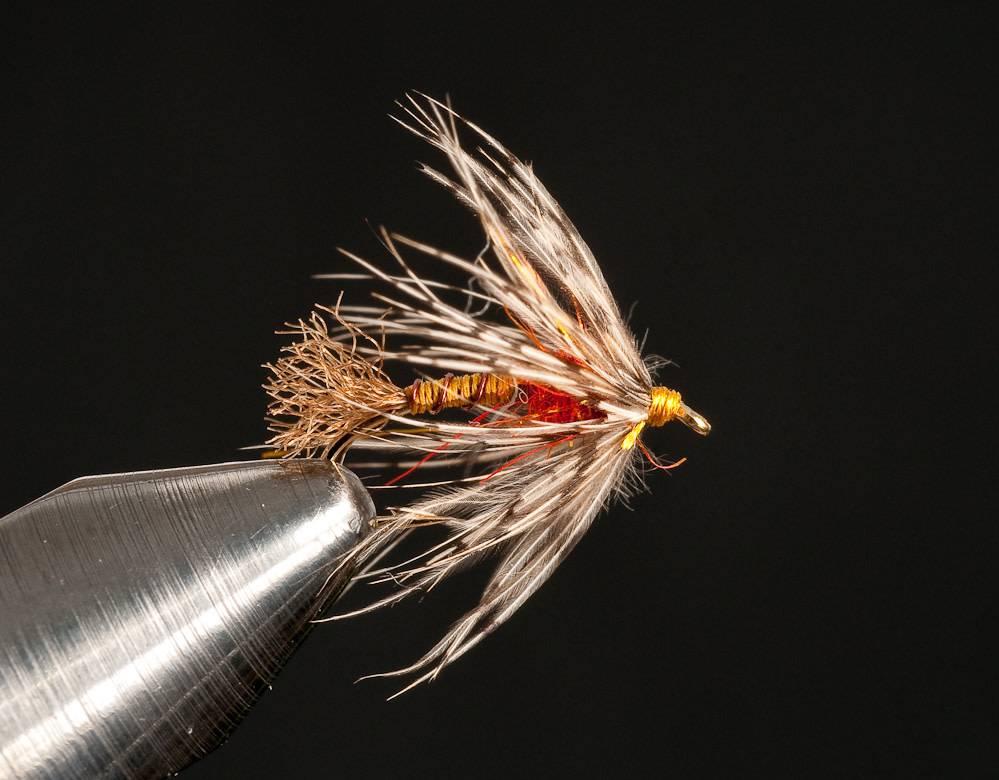 Micro Beeley