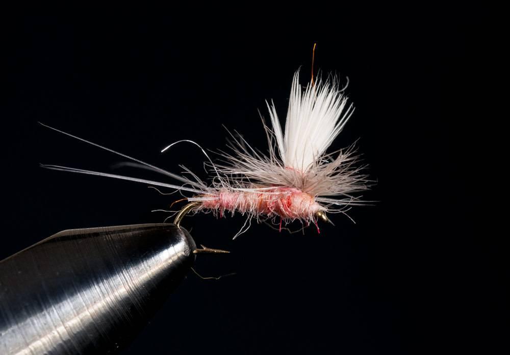 Parachute Pink