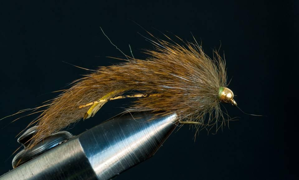 Pine Squirrel Leech