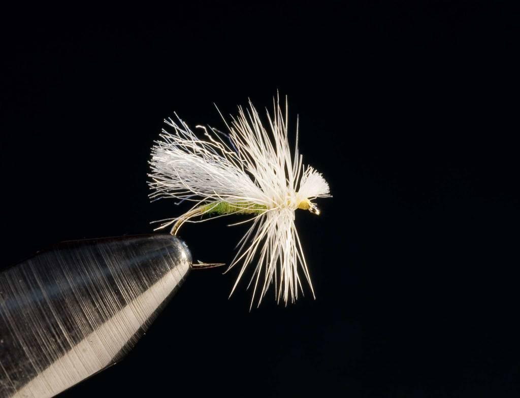 Fluttering White Miller
