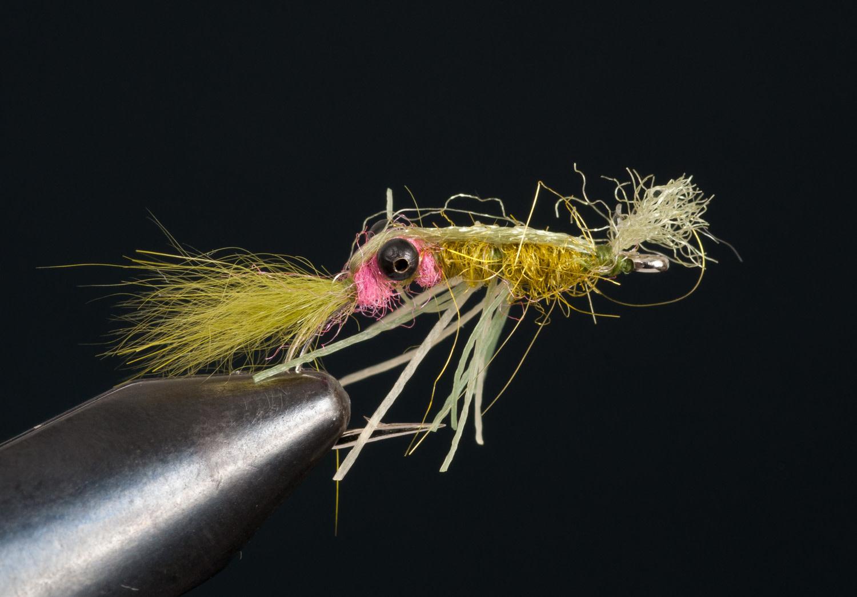 TDF Shrimp