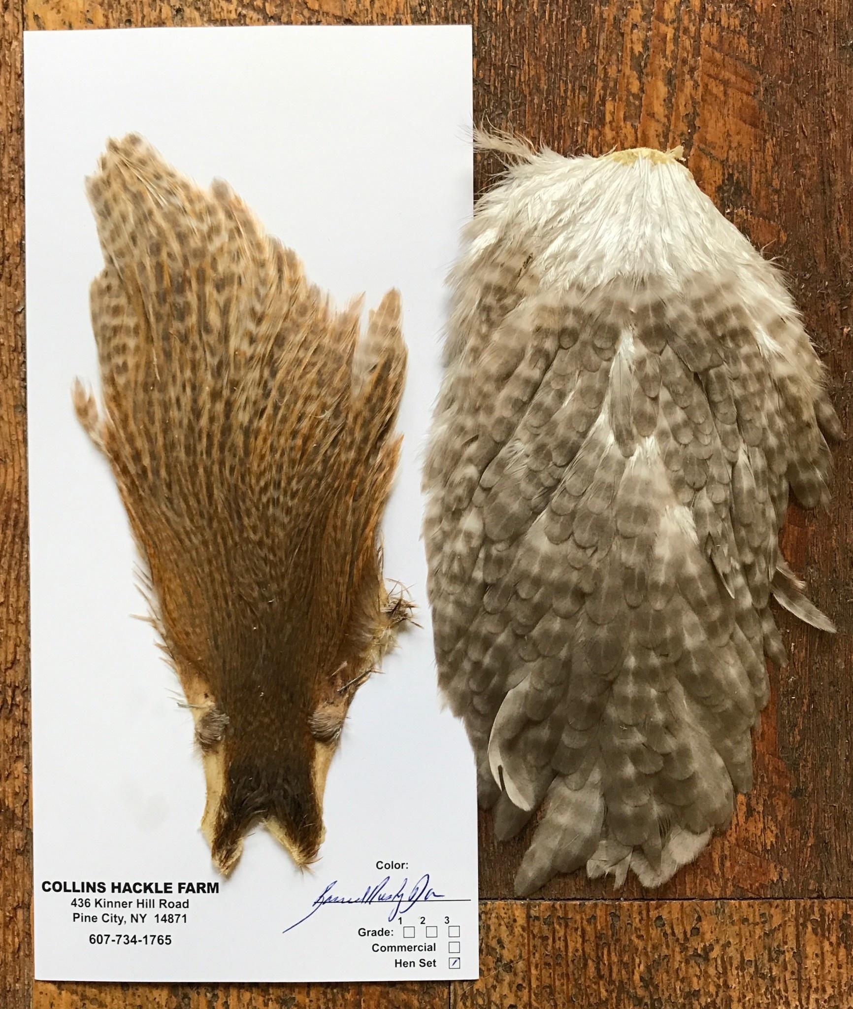 Collins Hen Cape/Saddle Barred Rusty Dun