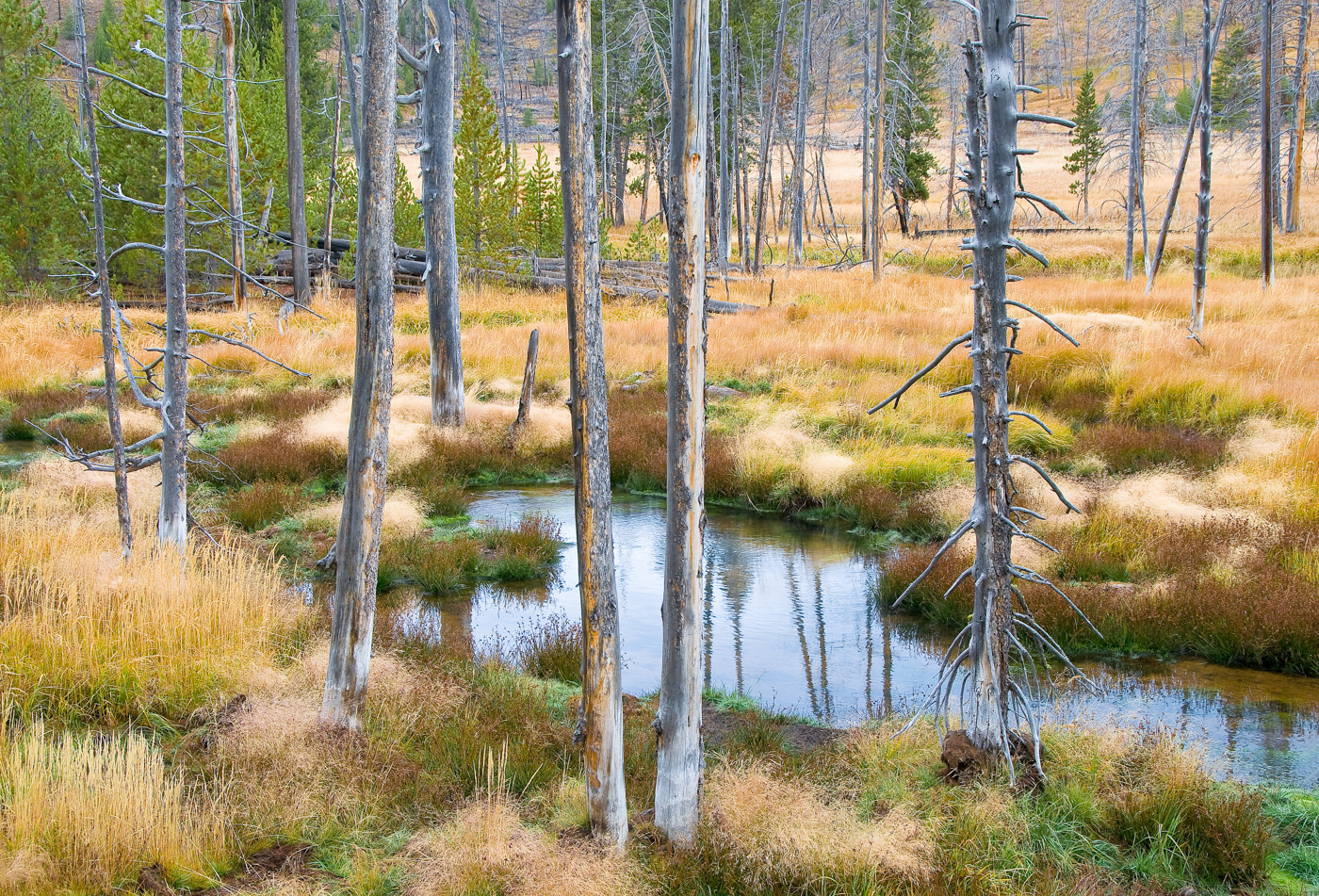 John Juracek Photos - Near Norris Geyser Basin