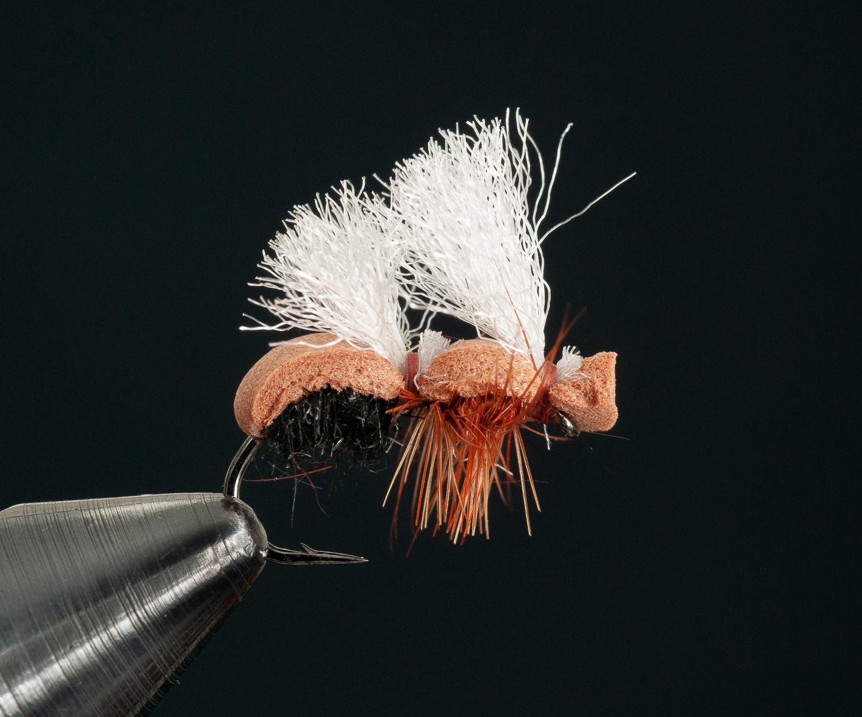 Stubby Ant