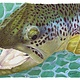 Conner Art - Brown Trout Print