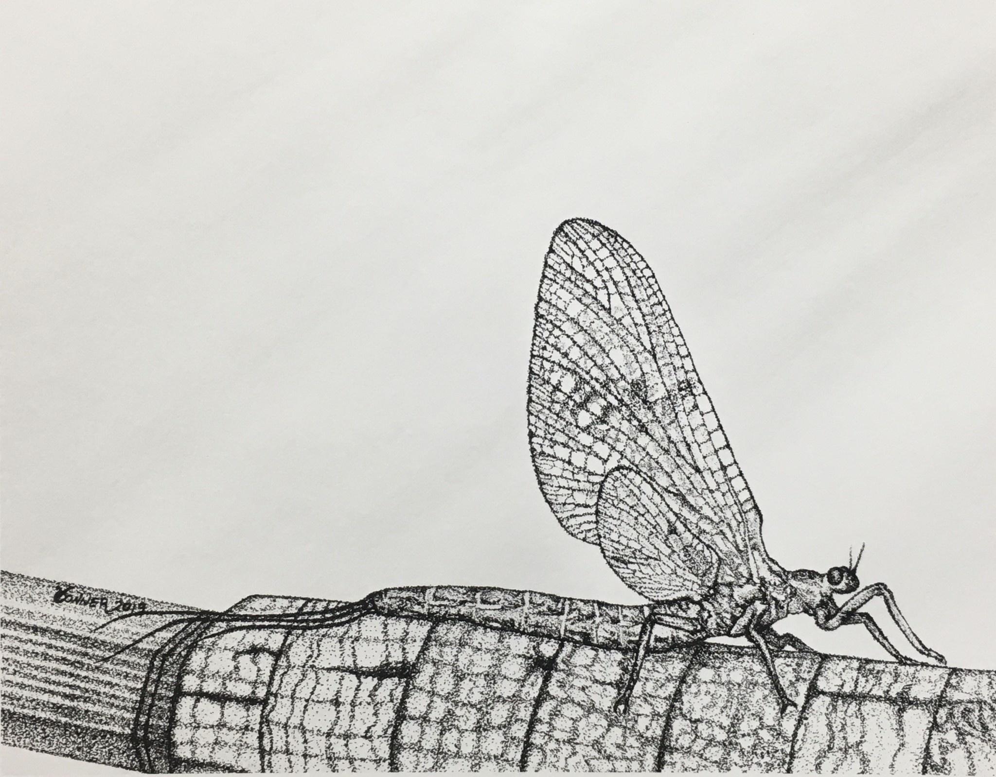 Conner Art - Ephemeroptera Print