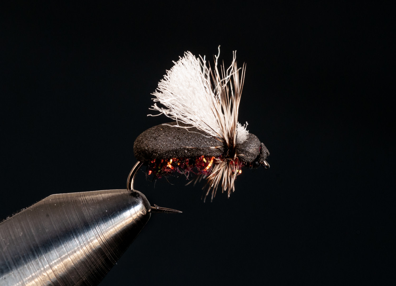 Stubby Beetle