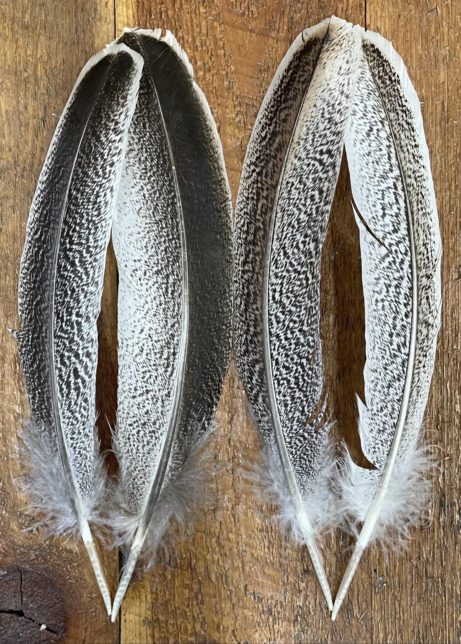 Turkey Wing Quill Mottled Oak #1