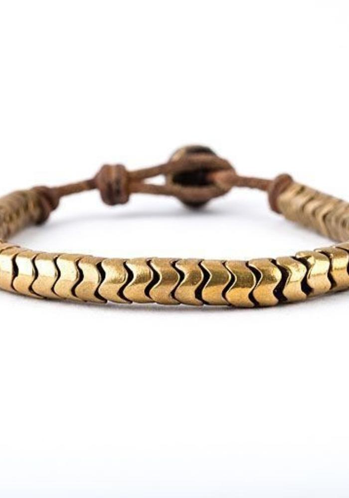 African Gold Snake Vertibre