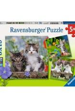 Ravensburger Chatons tigrés 3 x 49 pc Puzzles