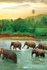 Eurographics Forêt tropicale   1000 pièces
